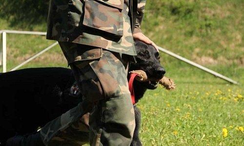 Служебная собака пограничников Литвы
