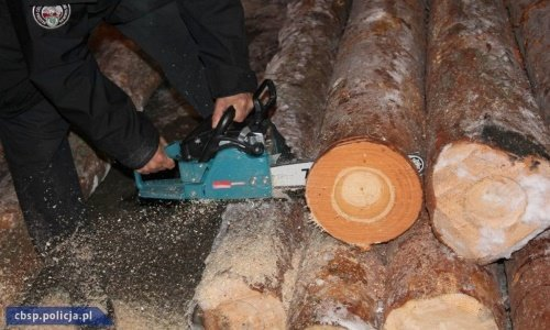 таможня пилит дерево со спрятанной контрабандой сигарет